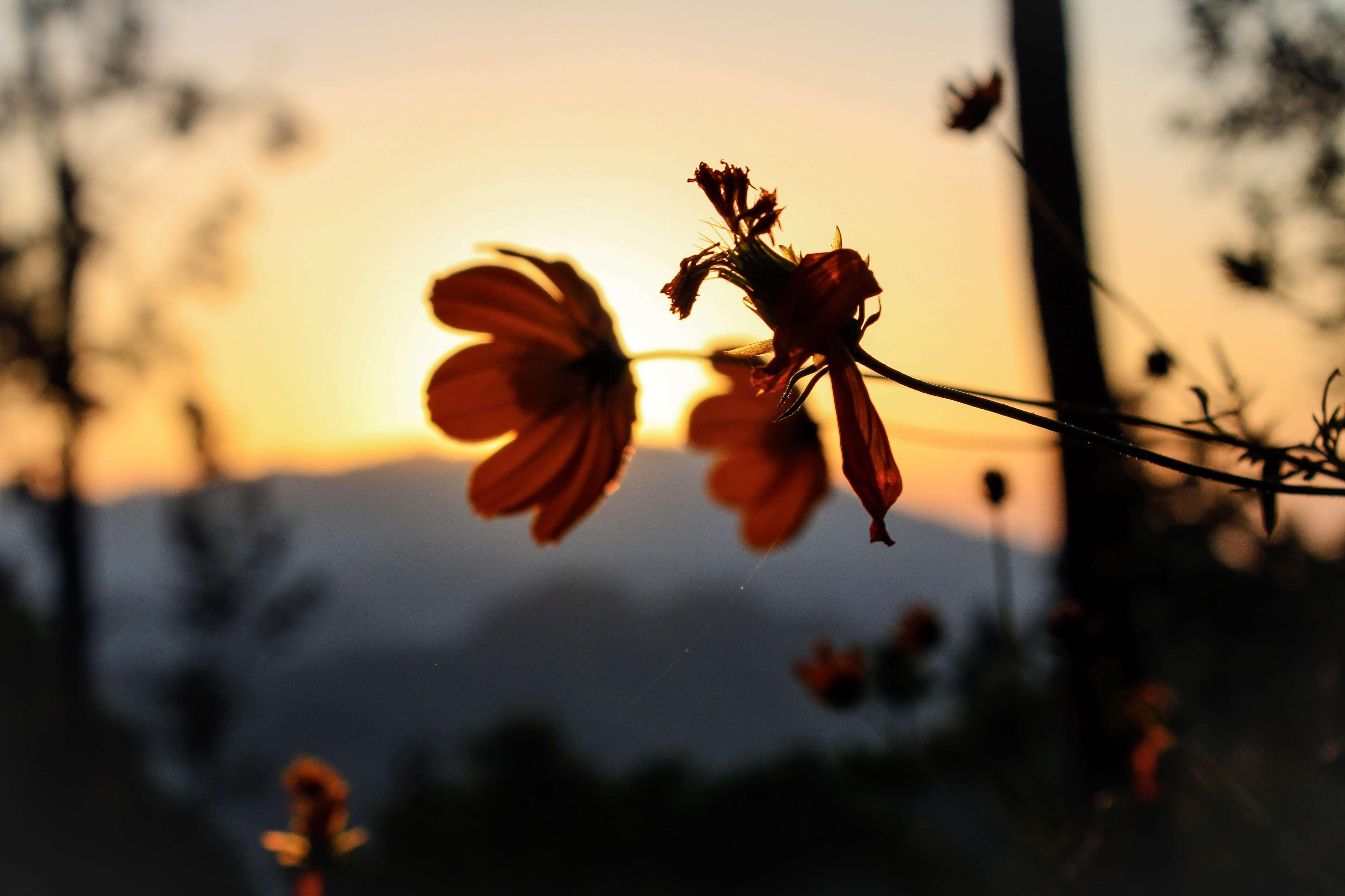 Ella sunrise Sr Lanka