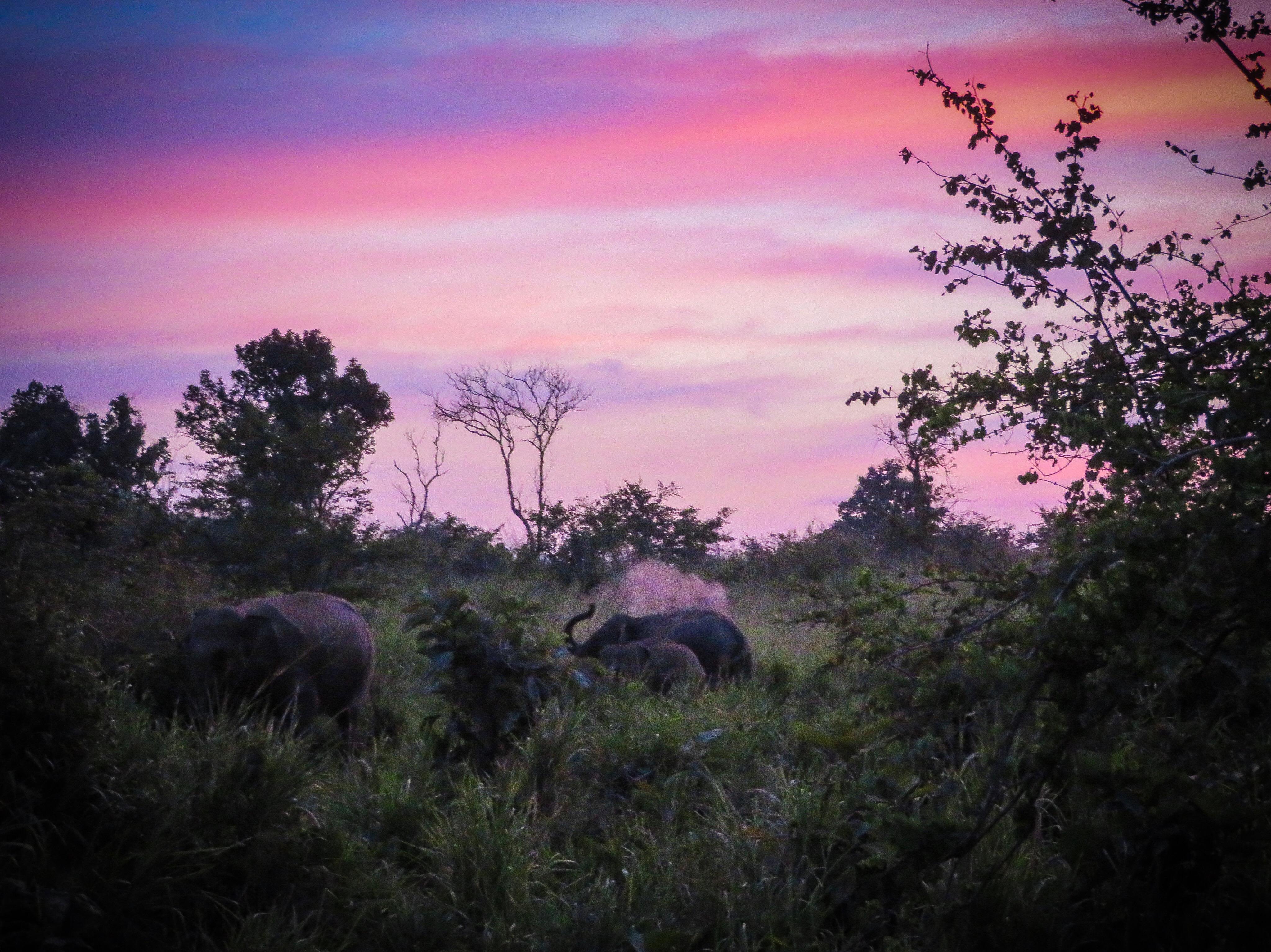 Eco park elephants