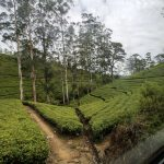 Little-Known Way Of Getting The Kandy To Nuwara Eliya Train
